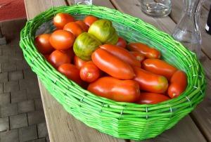Leuchtendes Grün mitten in kräftigem Rot - Tomatensorten gibt es viele...