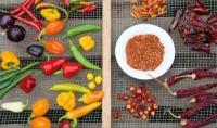 Chilis trocknen