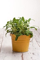 kleine kr uterkunde kochrezepte von kochen k che. Black Bedroom Furniture Sets. Home Design Ideas