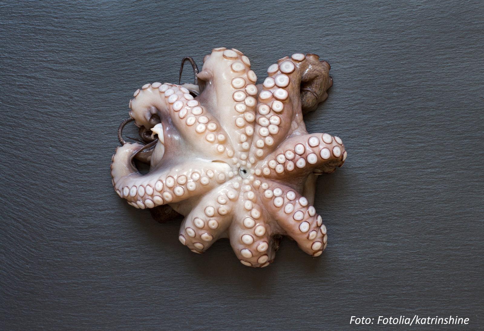 Berühmt Süße Oktopus Färbung Seite Galerie - Beispiel Business ...